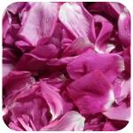 Tisane rose sauvage