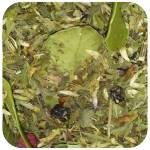 Tisane after fête